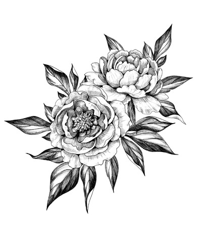 Hand drawn floral bunch with two Peony flowers and leaves isolated on white background. Pencil drawing monochrome elegant composition in vintage style. Foto de archivo - 118980167