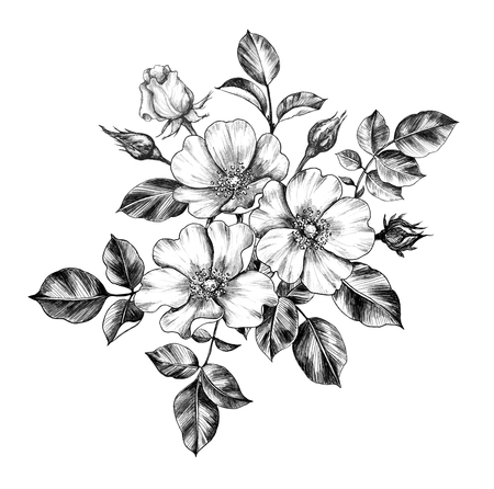 Hand drawn floral bunch with Dog-Rose flowers, buds and leaves isolated on white background. Pencil drawing monochrome elegant composition in vintage style.