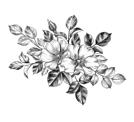 Hand drawn floral bunch with two Dog-Rose flowers and leaves isolated on white background. Pencil drawing monochrome elegant composition in vintage style.