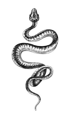 Boa dell'albero del giardino strisciante disegnato a mano isolato su priorità bassa bianca. Serpente di pitone monocromatico disegno a matita. Illustrazioni animalistiche in stile vintage, design t-shirt, tattoo art.