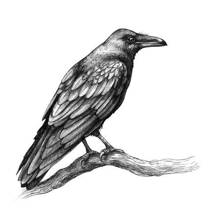 Handgezeichnete Krähe isoliert auf weißem Hintergrund. Schwarzer Vogel, der auf Baumast sitzt. Rabe mit großem Schnabel Seitenansicht Bleistiftzeichnung im Vintage-Stil, T-Shirt-Design, Tattoo-Kunst.