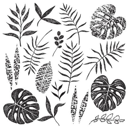 Conjunto de hojas tropicales dibujadas a mano aislado sobre fondo blanco. Hojas de palmera, monstera y diferentes formas de plantas en dibujo negro y textura de tiza.