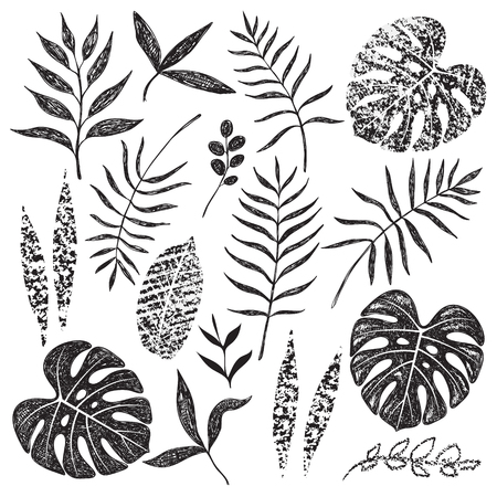 Hand drawn tropical leaves set isolated on white background. Palm fronds, monstera and different shapes of plants in black sketch and chalk texture. Vettoriali