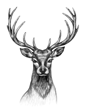 Hand drawn Red Deer head front view isolated on white background. Monochrome non-realistic deer head with big branched horns,  t-shirt design, tattoo art.