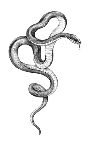 Serpiente retorcida dibujada a mano aislada sobre fondo blanco. Dibujo a lápiz ilustraciones monocromáticas de animales en estilo vintage, diseño de camisetas, arte del tatuaje. Foto de archivo