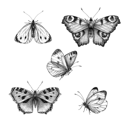 Hand drawn butterflies isolated on white background. Pencil drawing monochrome sitting and flying butterfly. Insect side and top view. Illustration in vintage style, t-shirt design, tattoo art. Archivio Fotografico - 120074609