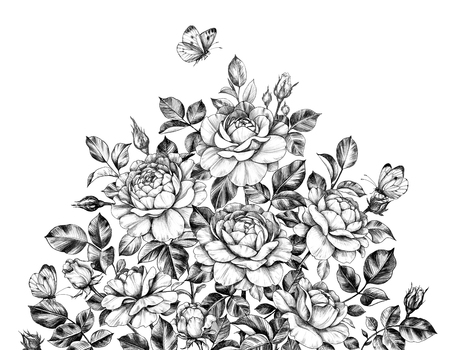 Hand drawn rose bush and flying butterfly isolated on white background. Pencil drawing flowers, leaves, buds and insects monochrome elegant composition in vintage style.