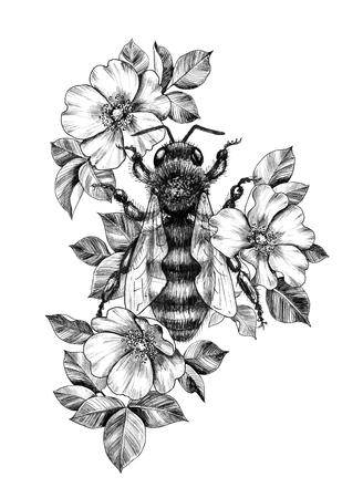 Disegnata a mano grande ape decorata con rose canine isolate su sfondo bianco. Disegno a matita ape monocromatica tra i fiori. Elegante composizione floreale in stile vintage, design t-shirt, arte del tatuaggio.