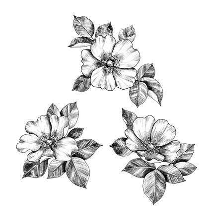 Hand drawn floral bunches with Dog-Rose flowers and leaves isolated on white background. Pencil drawing monochrome elegant composition in vintage style, t-shirt design, tattoo art.