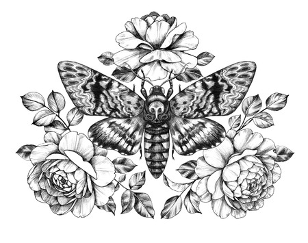 Hand drawn Acherontia Styx butterfly and Rose flowers on white. Pencil drawing monochrome elegant floral composition with Deaths-Head Hawkmoth top view. Illustration in vintage style, tattoo art. Stock Photo