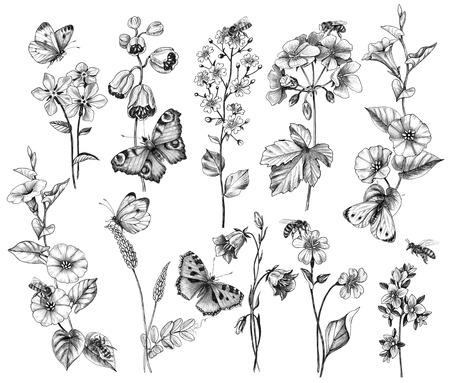 Hand getekende vlinders, bijen en wilde bloemen geïsoleerd op een witte achtergrond. Set van zwart-wit potlood tekenen vliegende en zittende insecten in de buurt van de bloemen.