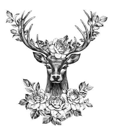 Hand drawn Red Deer decorated roses isolated on white background. Pencil drawing monochrome elegant floral composition with deer head and flowers in horns, t-shirt, tattoo design.