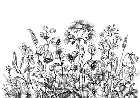 Hand drawn wildflowers isolated on white background. Pencil drawing  elegance flowers border in vintage style.