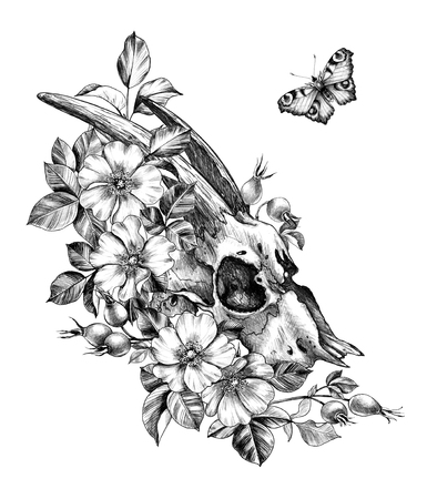 Hand drawn Goat Skull decorated Dog Rose Flowers and flying Butterfly isolated on white background. Pencil drawing cranium side view in vintage style, t-shirt design, tattoo art.