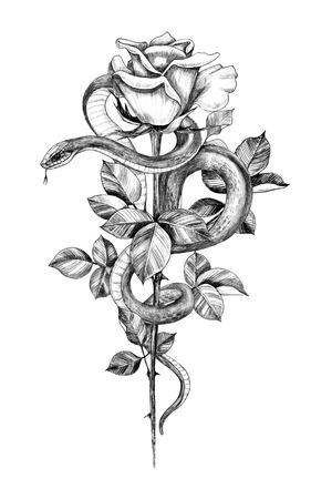 Handgezeichnete verdrehte Schlange mit Rose auf hohem Stiel, isoliert auf weiss. Bleistiftzeichnung monochrome Schlange und Blume. Vertikale Blumenillustration im Vintage-Stil, T-Shirt-Design, Tattoo-Kunst.