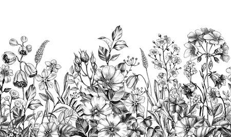 Frontera sin costuras hecha con plantas de pradera monocromáticas dibujadas a mano, rosa de perro y flores silvestres en fila sobre fondo blanco. Lápiz dibujo elegancia patrón floral en estilo vintage.