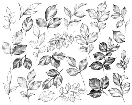 Hand drawn set of  various leaves isolated on white background. Pencil drawing monochrome floral elements in vintage style.
