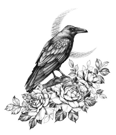 Hand drawn Crow bird sitting on branch and Roses on New Moon background. Pencil drawing monochrome elegant floral composition with flowers and raven side view vintage style, t-shirt, tattoo design. Stockfoto