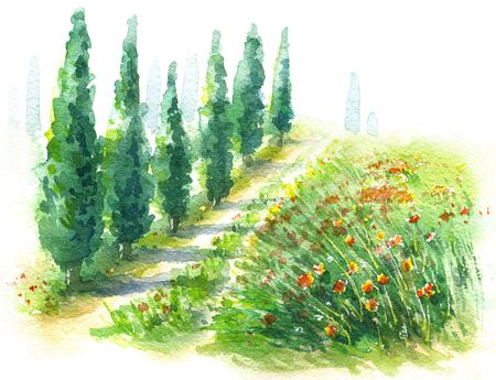 Hand drawn rural scene with cypress trees and red poppies watercolor sketch. Summer background with motley grass field.
