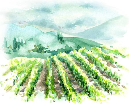 Hand drawn rural scene with vineyard, hills, trees and bushes. Summer landscape watercolor sketch. Imagens
