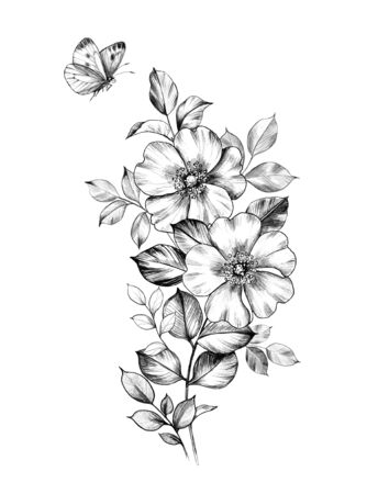 Hand drawn floral composition with dog rose flowers, leaves and flying butterfly isolated on white background. Pencil drawing monochrome elegant illustration in vintage style, t-shirt, tattoo design.