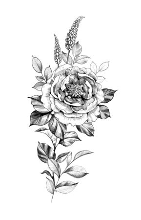 Hand drawn floral composition with big rose flower and leaves isolated on white background. Pencil drawing monochrome elegant illustration in vintage style, t-shirt, tattoo design.