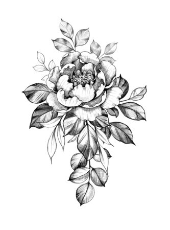 Hand drawn big rose flower and leaves isolated on white background. Pencil drawing monochrome elegant floral composition in vintage style, t-shirt, tattoo design. Stock fotó