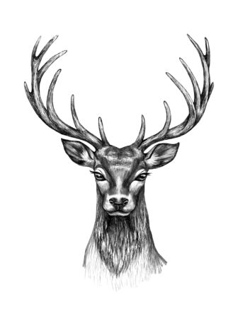 Hand drawn deer head isolated on white background. Monochrome non-realistic deer head with big branched horns,  t-shirt design, tattoo art. 스톡 콘텐츠