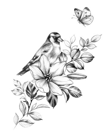 Hand drawn goldfinch sitting on branch with flower isolated on white background. Pencil drawing monochrome elegant floral composition with bird and butterfly in vintage style, t-shirt, tattoo design.  Фото со стока