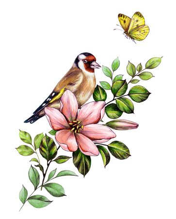 Hand drawn goldfinch sitting on branch with pink flower isolated on white background. Pencil drawing elegant floral composition with bird and yellow butterfly in vintage style, t-shirt, tattoo design.