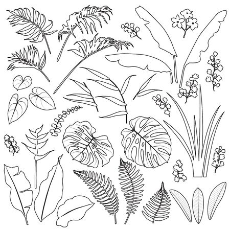 Tropical plant set. Black outline palm fronds, banana, monstera, fern leaves and tropic flowers isolated on white background.