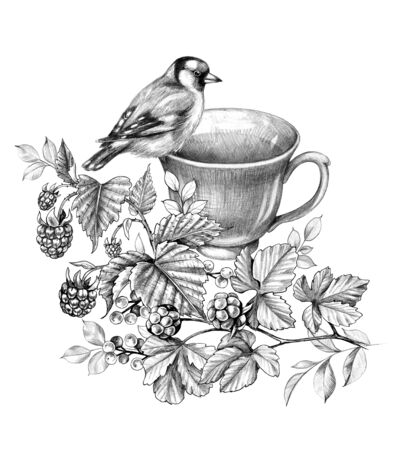 Hand drawn cup of herbal tea, goldfinch and berries isolated on white background. Monochrome floral composition with teacup, bird and branches with raspberry, cloudberry, small fruit in vintage style.