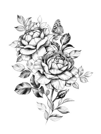 Hand drawn rose flowers bunch with sitting butterfly isolated on white background. Pencil drawing monochrome elegant floral composition in vintage style, t-shirt, tattoo design. Archivio Fotografico - 129338976