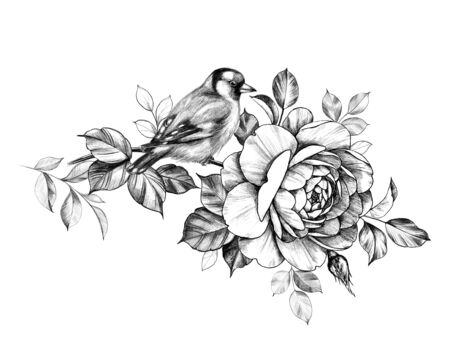 Hand drawn goldfinch sitting on rose branch isolated on white background. Pencil drawing monochrome floral composition with bird and beautiful flower in vintage style, t-shirt, tattoo design.