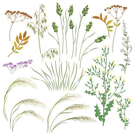 Ensemble d'herbes sauvages, d'herbes et de céréales isolés sur fond blanc. L'avoine simple, la laitue, le pâturin, l'armoise, l'herbe mate et les fleurs des champs sont une illustration vectorielle à plat.