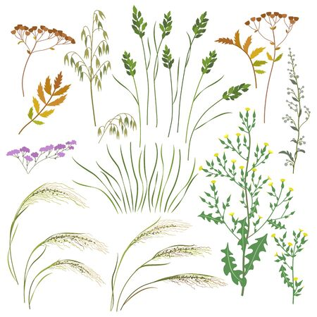 Set of wild grasses, herbs and cereals isolated on white background.  Simple oats, lettuce, bluegrass, sagebrush,   mat grass and field flowers vector flat illustration. Иллюстрация