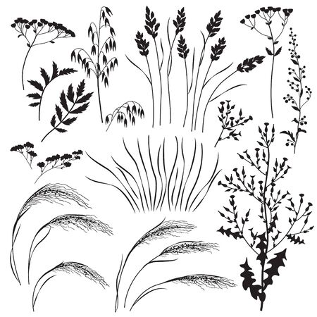 Silhouette set of wild grasses, herbs and cereals isolated on white background.  Simple oats, lettuce, bluegrass, sagebrush,   mat grass and field flowers vector flat illustration. Vettoriali