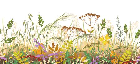 Seamless horizontal border made with autumn meadow plants. Fading and dried grass and wild flowers in row on white background.  Floral natural pattern vector flat illustration.