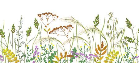 Bordo orizzontale senza cuciture realizzato con piante selvatiche. Erba di prato e fiori di campo in fila su sfondo bianco. Illustrazione piana di vettore del reticolo naturale floreale.
