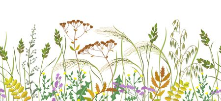 Seamless horizontal border made with wild plants. Meadow grass and wildflowers in row on white background.  Floral natural pattern vector flat illustration.