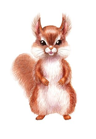 Hand drawn red squirrel isolated on white background. Pencil drawing.cartoon illustration of cute furry rodent with tail.