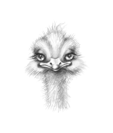 Hand drawn monochrome ostrich isolated on white background. Pencil drawing cartoon illustration of cute furry nestling with big eyes and long neck.
