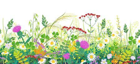 Bordo orizzontale di linea senza cuciture realizzato con piante di prato estivo. Erba verde e fiori selvatici in fila su sfondo bianco. Illustrazione piana di vettore del reticolo naturale floreale. Vettoriali
