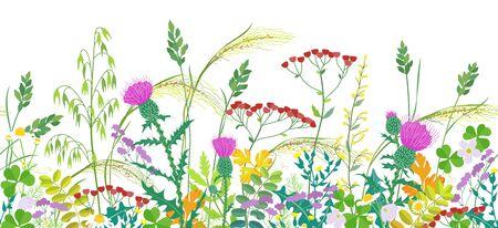 Borde horizontal de línea transparente hecho con plantas de pradera de verano. Hierba y coloridas flores silvestres en fila sobre fondo blanco. Ilustración plana de vector floral patrón natural. Ilustración de vector