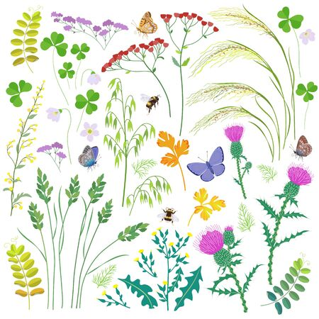 Set of wild grasses, herbs, wildflowers, cereals and insects isolated on white.