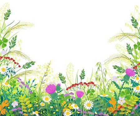 Bordo orizzontale con piante di prato estivo. Erba verde, fiori colorati, orecchie di cereali selvatici su sfondo bianco con spazio per il testo. Illustrazione piana di vettore del fondo di estate naturale floreale. Vettoriali