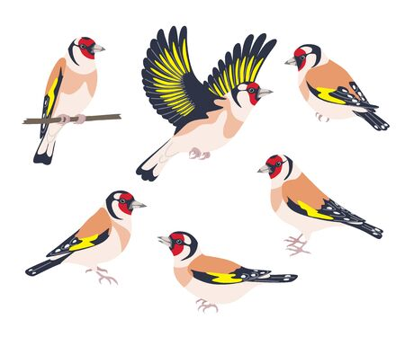 Simple Goldfinches isolated on white. Set of side view flying and sitting birds with bright colored plumage. Forest or park songbird vector illustration in flat style.
