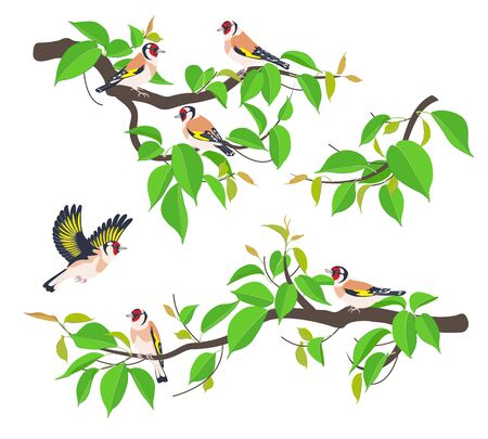 Set of simple Goldfinches on tree branches with young green leaves isolated on white. Flying and sitting birds with bright colored plumage. Forest or park songbird vector illustration in flat style.