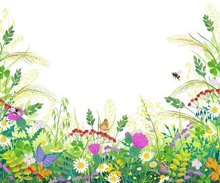 Horizontal border with summer meadow plants. Green grass, colorful flowers, butterflies and bumblebees on white background with space for text. Floral natural backdrop vector flat illustration.