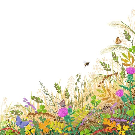 Colorful border with autumn meadow plants and insects. Floral background with fading grass, wild flowers, spider on web, bumblebee and butterflies on white, space for text. Vector flat illustration. Vettoriali